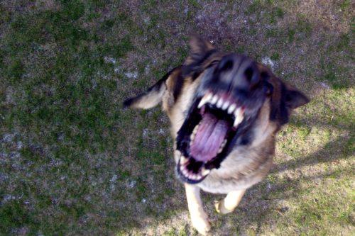 Pies, najlepszy przyjaciel człowieka i największy wróg biegacza